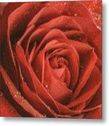 Rose Waiting In The Rain Metal Print