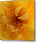 Rose Yellow Metal Print