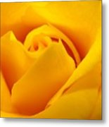 Rose Yellow Metal Print