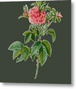 Rose101 Metal Print