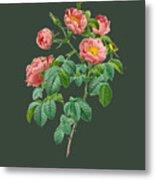 Rose114 Metal Print