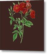 Rose115 Metal Print