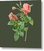 Rose128 Metal Print