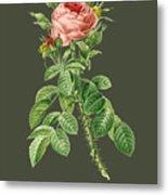 Rose144 Metal Print