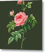 Rose61 Metal Print