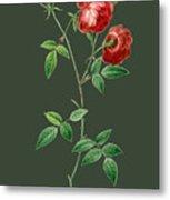 Rose65 Metal Print
