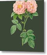 Rose82 Metal Print