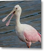 Roseate Spoonbill With Something To Say Metal Print