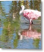 Roseate Spoonbill Young Adult Metal Print