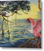Roseate Spoonbills Among The Mangroves Metal Print