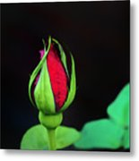Rosebud Metal Print