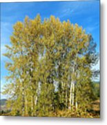 Rosehips And Cottonwoods Metal Print