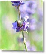 Rosemary And Lavender Metal Print