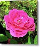 Roses 10 Metal Print