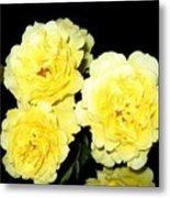 Roses 11 Metal Print
