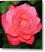 Roses 12 Metal Print