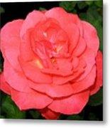 Roses 3 Metal Print