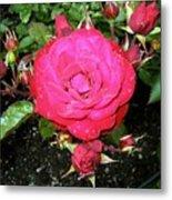Roses 5 Metal Print