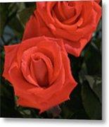 Roses-5840 Metal Print