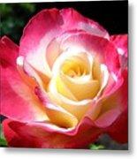 Roses 7 Metal Print
