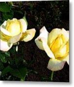 Roses 8 Metal Print
