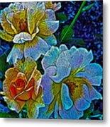 Roses Aglow Metal Print