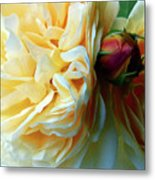 Roses And Bud Metal Print
