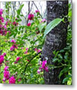 Roses And Mist Metal Print