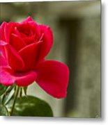 Red Rose Wall Art Print Metal Print