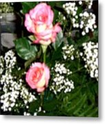 Roses Are Truly Beautiful  Metal Print