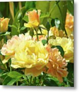 Roses Art Prints Rose Garden Flowers Giclee Prints Baslee Troutman Metal Print