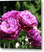 Roses Art Rose Garden Pink Purple Floral Prints Baslee Troutman Metal Print