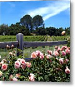 Roses At Rusack Vineyards Metal Print