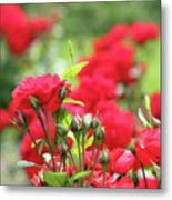 Roses Garden Spring Scene Metal Print