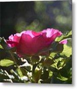 Rose's Illumination Metal Print