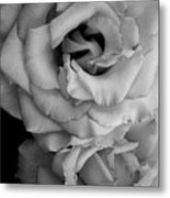 Roses In Black And White Metal Print