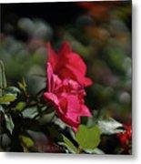Roses In The Wind Metal Print