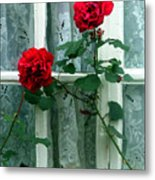 Roses In The Window Metal Print