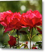 Roses On A Sunny Day Metal Print
