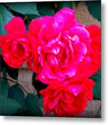 Roses On Stucco Metal Print