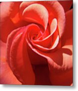 Roses Orange Rose Flower Spiral Artwork 4 Rose Garden Baslee Troutman Metal Print