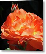 Roses Orange Rose Flowers Rose Garden Art Baslee Troutman Metal Print