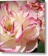 Roses Pink White Rose Flowers 4 Rose Garden Artwork Baslee Troutman Metal Print