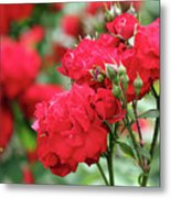 Roses Spring Scene Metal Print