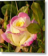Roses Warm Hearts Metal Print