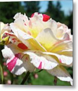 Roses White Pink Yellow Rose Flowers 3 Rose Garden Art Baslee Troutman Metal Print