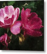 Roses With Texture Metal Print