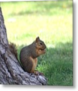 Roswell Squirrel Metal Print