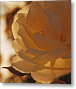 Rosy Afternoon 3 Metal Print