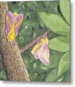 Rosy Maple Moth Gathering Metal Print